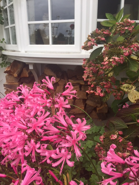 Autumn-Florals