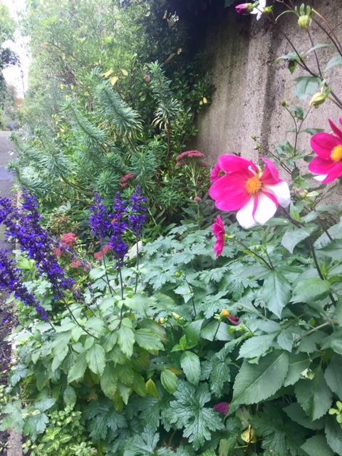 Exquisite English Flowers
